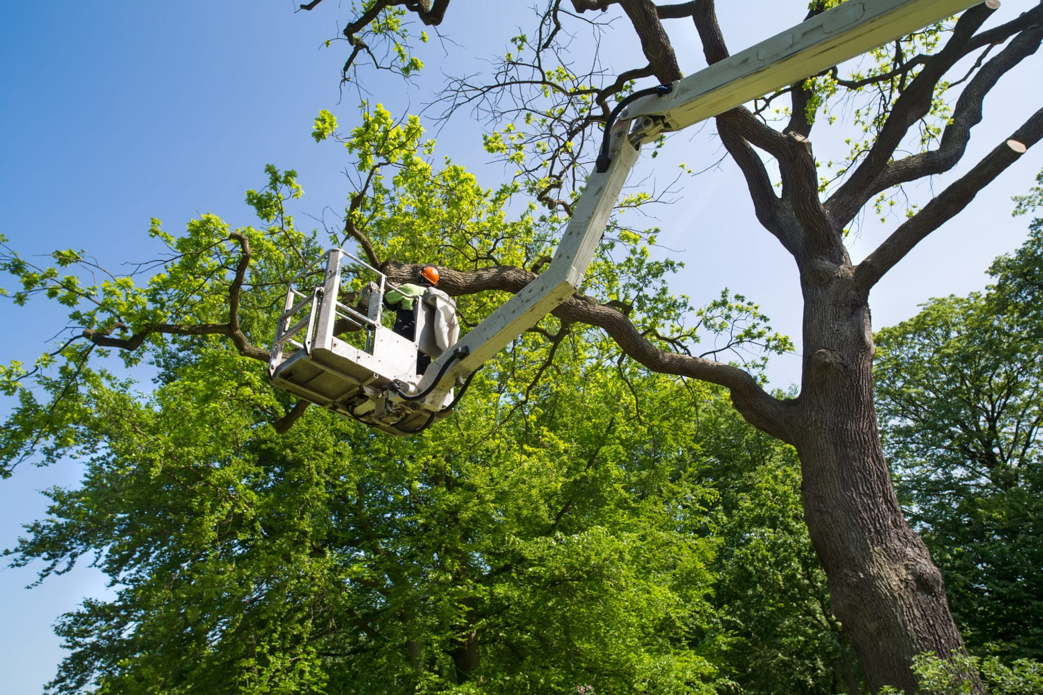 aanbesteding groenwerkzaamheden gemeente rotterdam