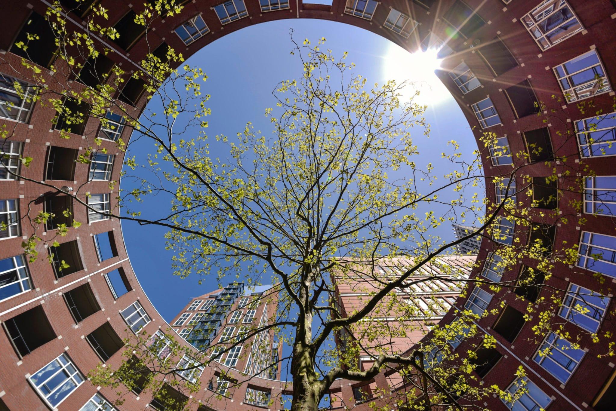 Circulaire houtketen stad Den Haag